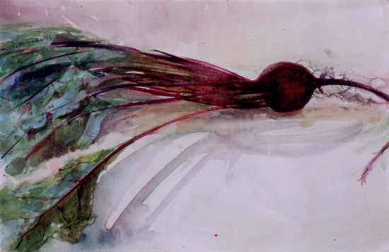 image of watercolor still life painting Beet by David Ladmore