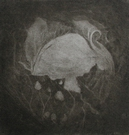 image of still-life mezzotint etching Cabbage Light by David Ladmore