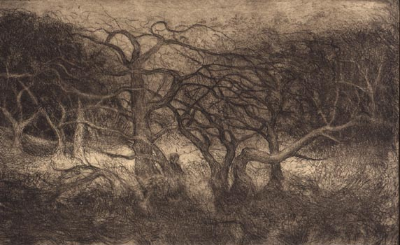 image of landscape drypoint print Garry Oaks V by David Ladmore depicting Garry Oak trees in Beacon Hill Park, Victoria, BC