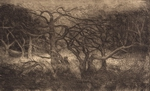 image of landscape drypoint with etching Garry Oaks V by David Ladmore depicting Garry Oak trees in Beacon Hill Park, Victoria, BC