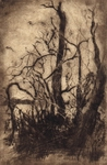 image of landscape drypoint etching Garry Oaks VI by David Ladmore depicting Garry Oak trees in Beacon Hill Park, Victoria, BC