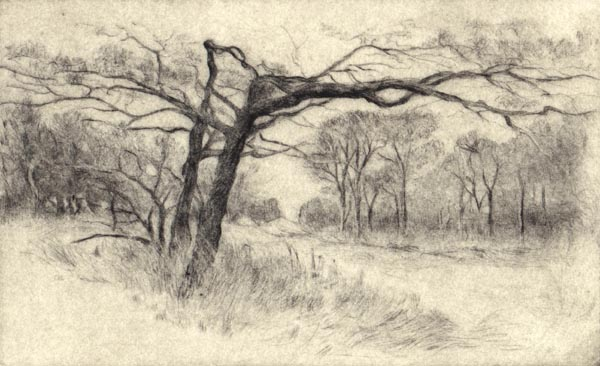 image of landscape drypoint print Garry Oaks III by David Ladmore depicting Garry Oak trees in Beacon Hill Park, Victoria, BC