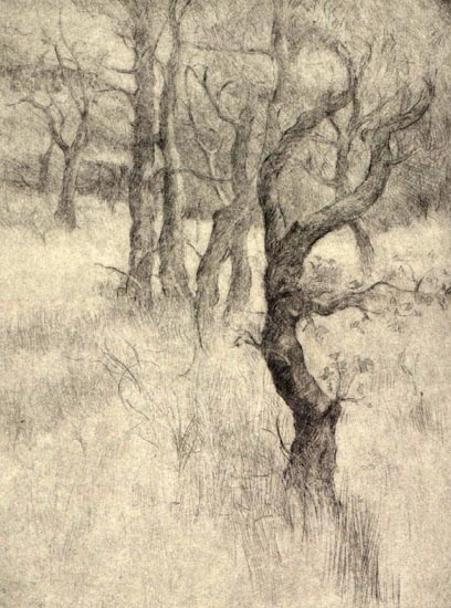 image of landscape drypoint etching Garry Oaks II by David Ladmore