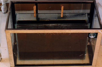 image of prepared copper plate being suspended in a tank of ferric chloride