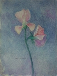 image of floral watercolor painting Sweetpeas VI by David Ladmore