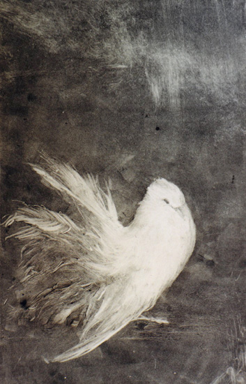 image of monotype print White Bird by David Ladmore